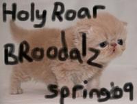 Holy Roar Spring '09 Digital Sampler