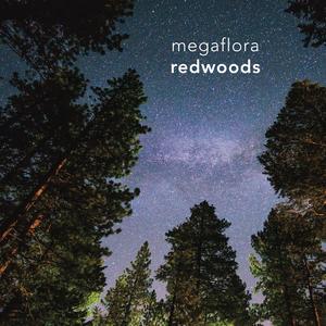 Megaflora - Redwoods