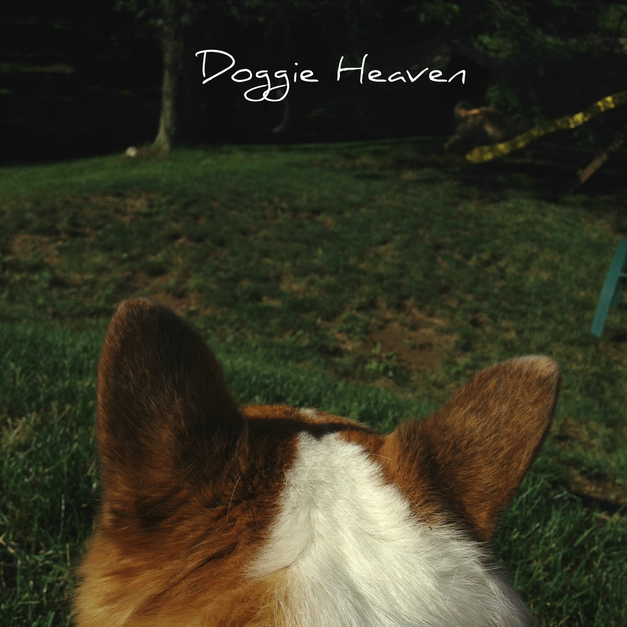 Curse Words - Doggie Heaven