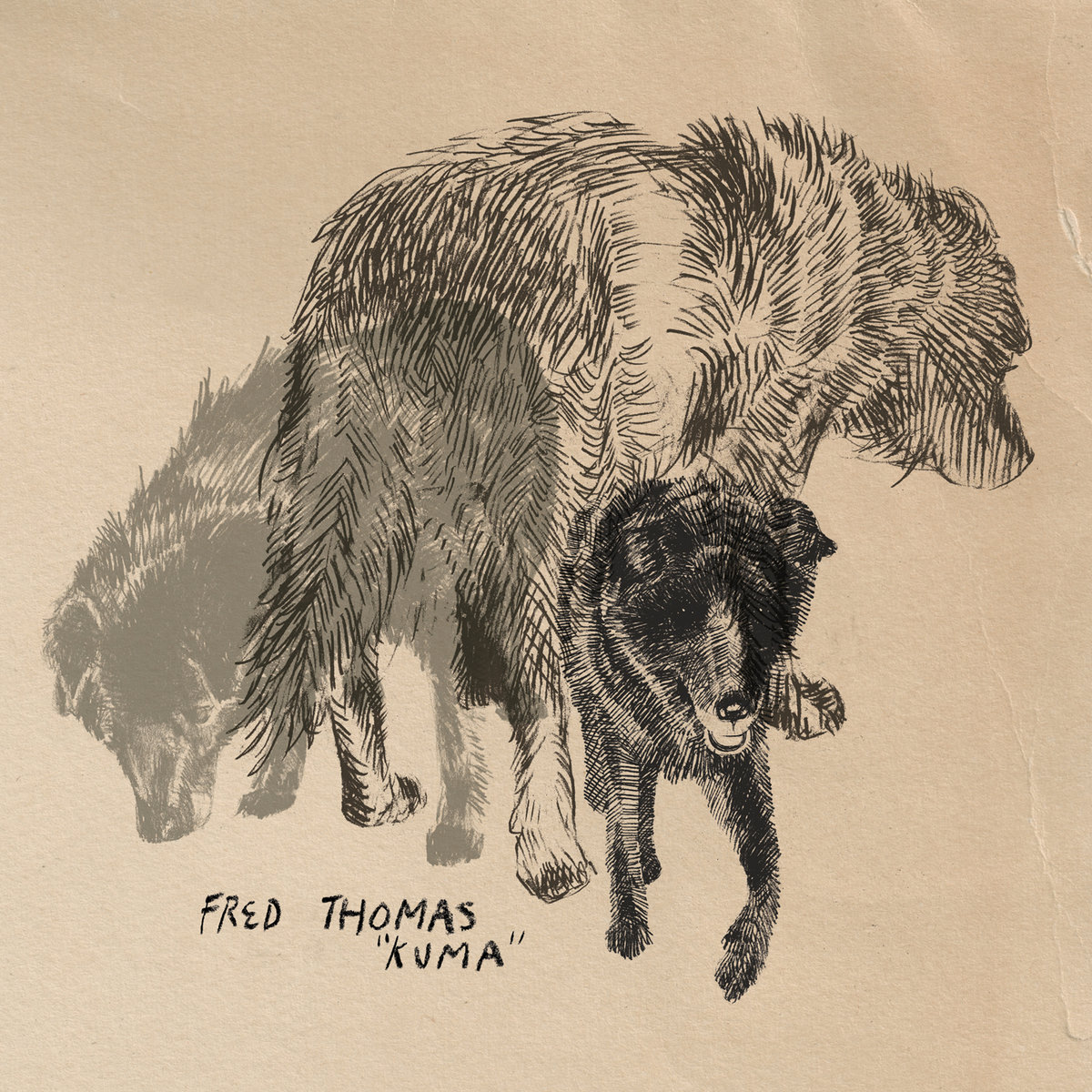 Fred Thomas - Kuma