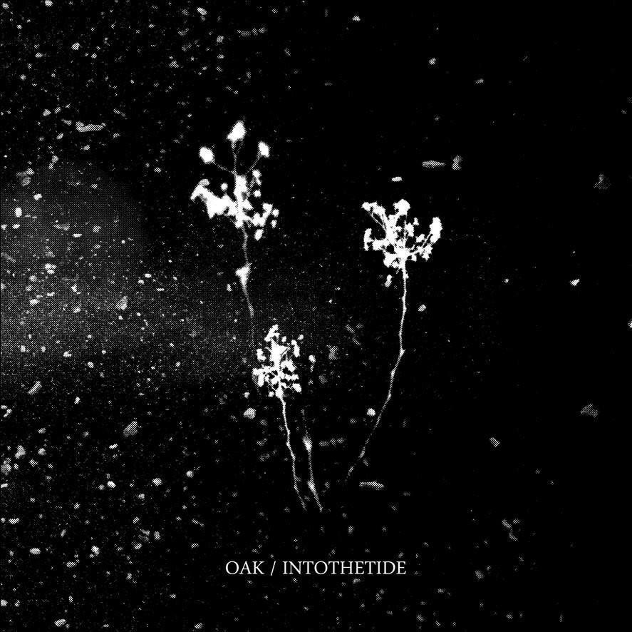 OAK / INTO THE TIDE - Split