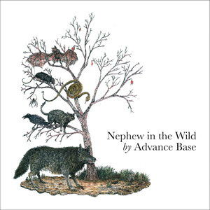 ADVANCE BASE- Nephew in the Wild