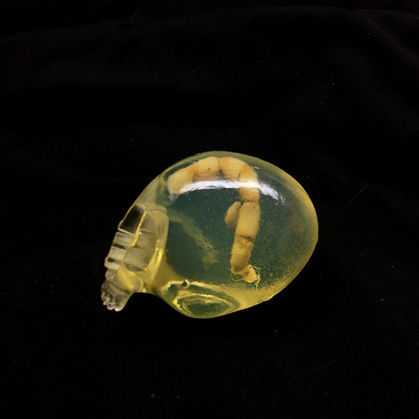 Tequila With The Worm P+P Resin Skull