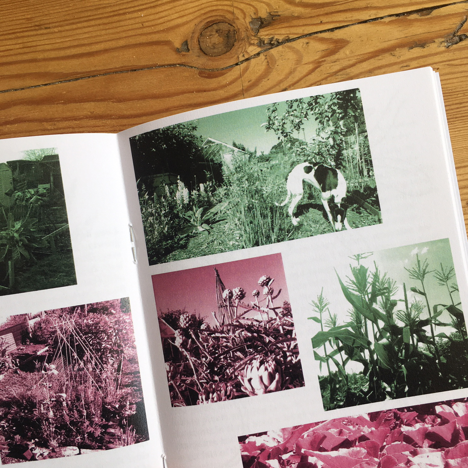 A Year in the Allotment - A6 zine