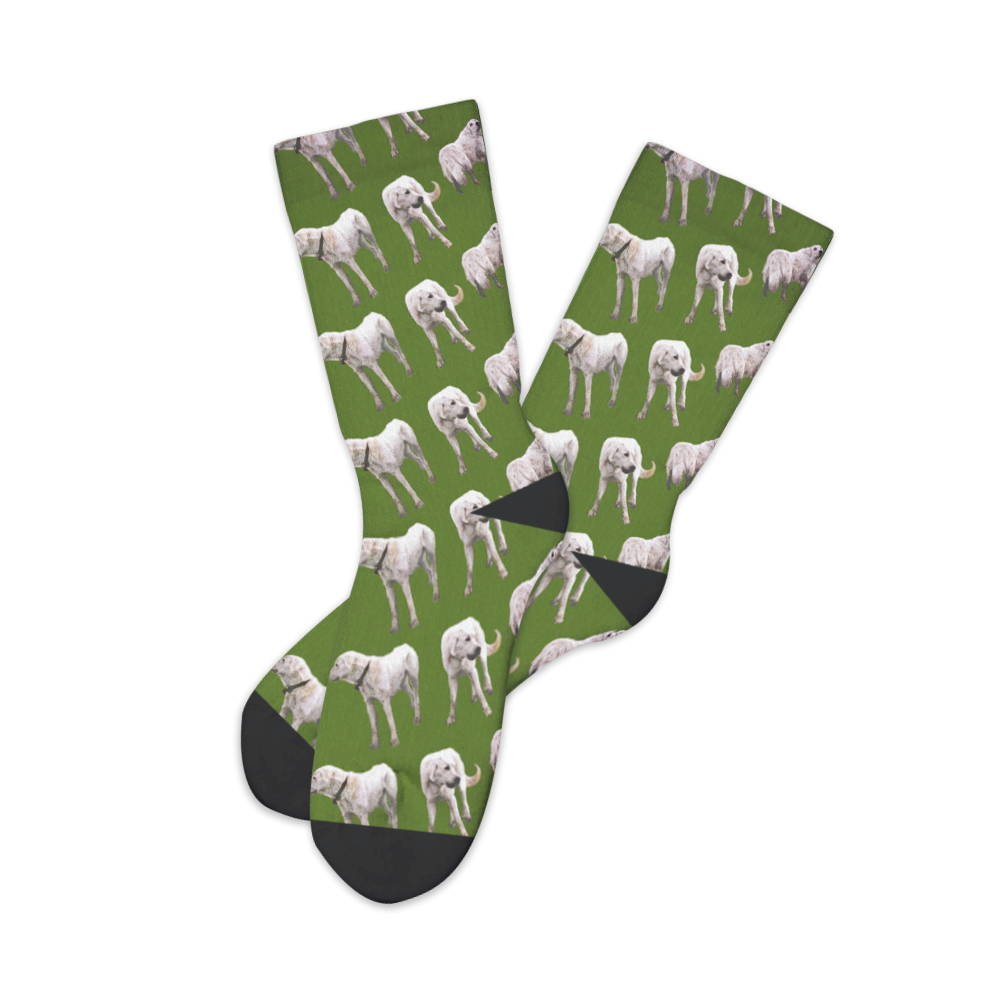 Socks (The Albatross)